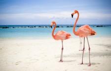 Aruba-Caribbean-101