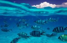 Lagoon Life