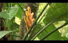 Exploring St Kitts – TravelGuru.tv